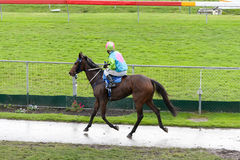 Rennenpferd Stockfotos
