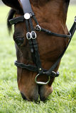 Rennenpferd, das 01 weiden lässt Lizenzfreie Stockbilder