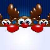Rennes de bande dessinée de Noël au-dessus du fond bleu tenant le blanc Image libre de droits