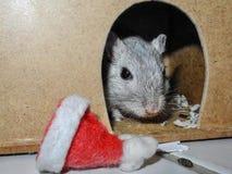 Rennmaus, die aus Haustierhaus mit Weihnachtenbeanie heraus schaut stockbild