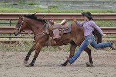 Rennpferd Stockfoto
