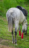 Rennpferd lassen weiden stockfoto