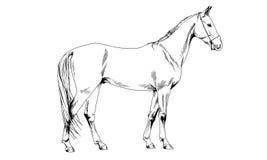 Rennpferd ohne ein Geschirr eigenhändig gezeichnet in Tinte Lizenzfreie Stockbilder