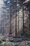 rennsteig утра осени Стоковое Фото