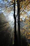 rennsteig утра осени Стоковые Фото