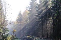 rennsteig утра осени стоковая фотография
