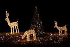 Reno con el árbol de navidad Fotografía de archivo libre de regalías