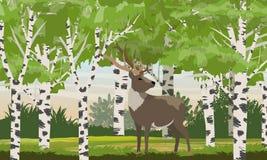 Reno en un ciervo del bosque del abedul Animales salvajes de Eurasia y de Norteam?rica ilustración del vector
