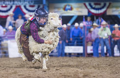 Reno Rodeo Royalty-vrije Stock Fotografie