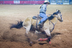 Reno Rodeo Royalty Free Stock Photos