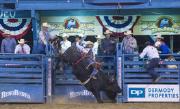 Reno Rodeo Stock Images