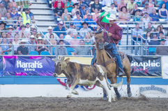 Reno Rodeo Royalty Free Stock Image