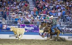 Reno Rodeo Stock Photos