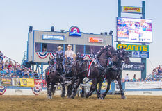 Reno Rodeo Stock Photography