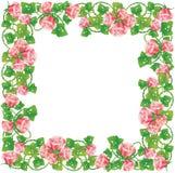 Renommée rose illustrée Photographie stock