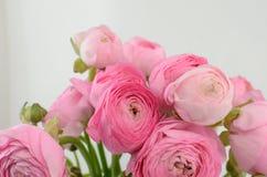 Renoncule persane Groupe pâle - le ranunculus rose fleurit le fond clair photos stock