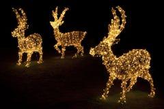 Renos encendidos para la Navidad Imagen de archivo libre de regalías