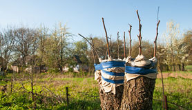 Renovação da árvore fotografia de stock