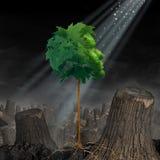 Renovação e esperança Foto de Stock Royalty Free