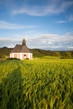 Renovated church on the edge of a cornfield Stock Image
