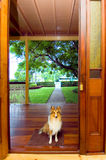 Renovated home with dog. A spotless house and a spotless landscaped garden to match with a very well kept miniature border collie as a guard dog or at least a royalty free stock image