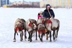 Renpferdeschlitten, der durch den Schnee auf einem Hintergrund der Stadt läuft Stockbild