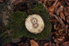 Rensa cirkeln Fotografering för Bildbyråer