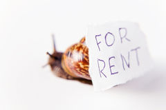 For rent… Stock Photography