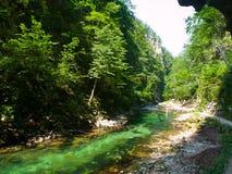 Rent blått vatten av den Radovna floden i den Vintgar klyftan Naturliga vattenfall, tips och forsar och turist- bana slovenia Arkivbild