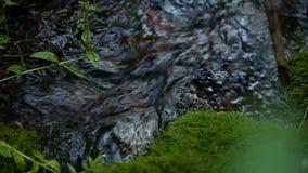 Rent vårvatten i The Creek i bergen stock video