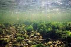 Rent vatten för undervattens- landskap Arkivfoton