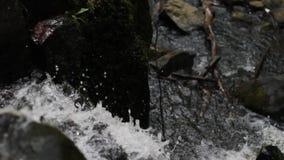 Rent vatten från källan flödar ner en tysk skog arkivfilmer