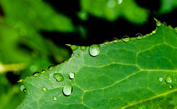 Rent vatten på bladet Arkivfoto