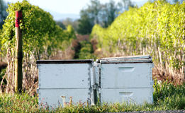 Rented Washington Bee Boxes Stock Photo