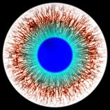 Rentgen scan eye with open pupil and bright blue retina in background. Dark colorful iris around pupil,  isolated  eye. Royalty Free Stock Photos