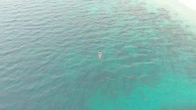 A?reo: mujer que bucea en el mar del Caribe tropical del arrecife de coral metrajes