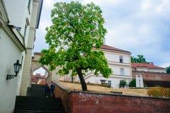 República Checa - corte 3 de la catedral de Moravia - de Brno fotografía de archivo