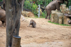República Checa praga Parque zoológico de Praga Elefante del bebé 12 de junio de 2016 Foto de archivo