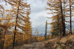 República de Altai Fotografia de Stock
