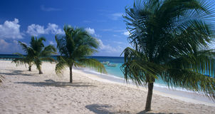 República Dominicana da praia do console de Saona Fotos de Stock