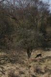 rep заповедника игры чехословакских оленей залежный Стоковые Фото