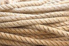 rep Fotografering för Bildbyråer