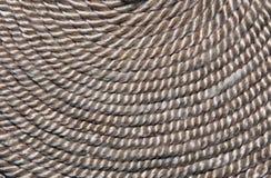 rep Arkivbild