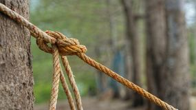 Rep med fnuren runt om trädstammen Fotografering för Bildbyråer