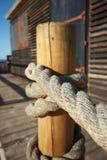 Rep som binds till en träpol Arkivfoto