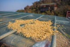 Rep som torkas i det glass taket fotografering för bildbyråer