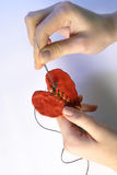 Repair action on human heart. Emergency repair action on human heart royalty free stock photo