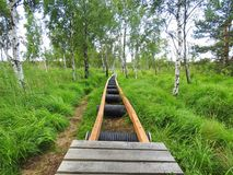Repair wooden path in swamp, Lithuania Royalty Free Stock Image