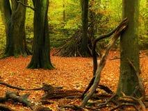Repaire de région boisée Photographie stock