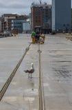 Repairing fishing nets. Stock Photography